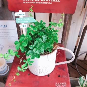 新作 【シュガーバイン】ピックつき!白系ブリキ鉢♪ナチュラルグリーン 植物インテリア