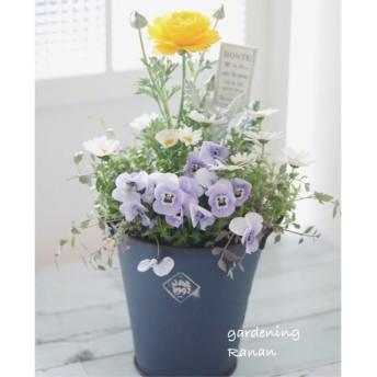 お花でほっこり ‧ ラナンキュラスの寄せ植え