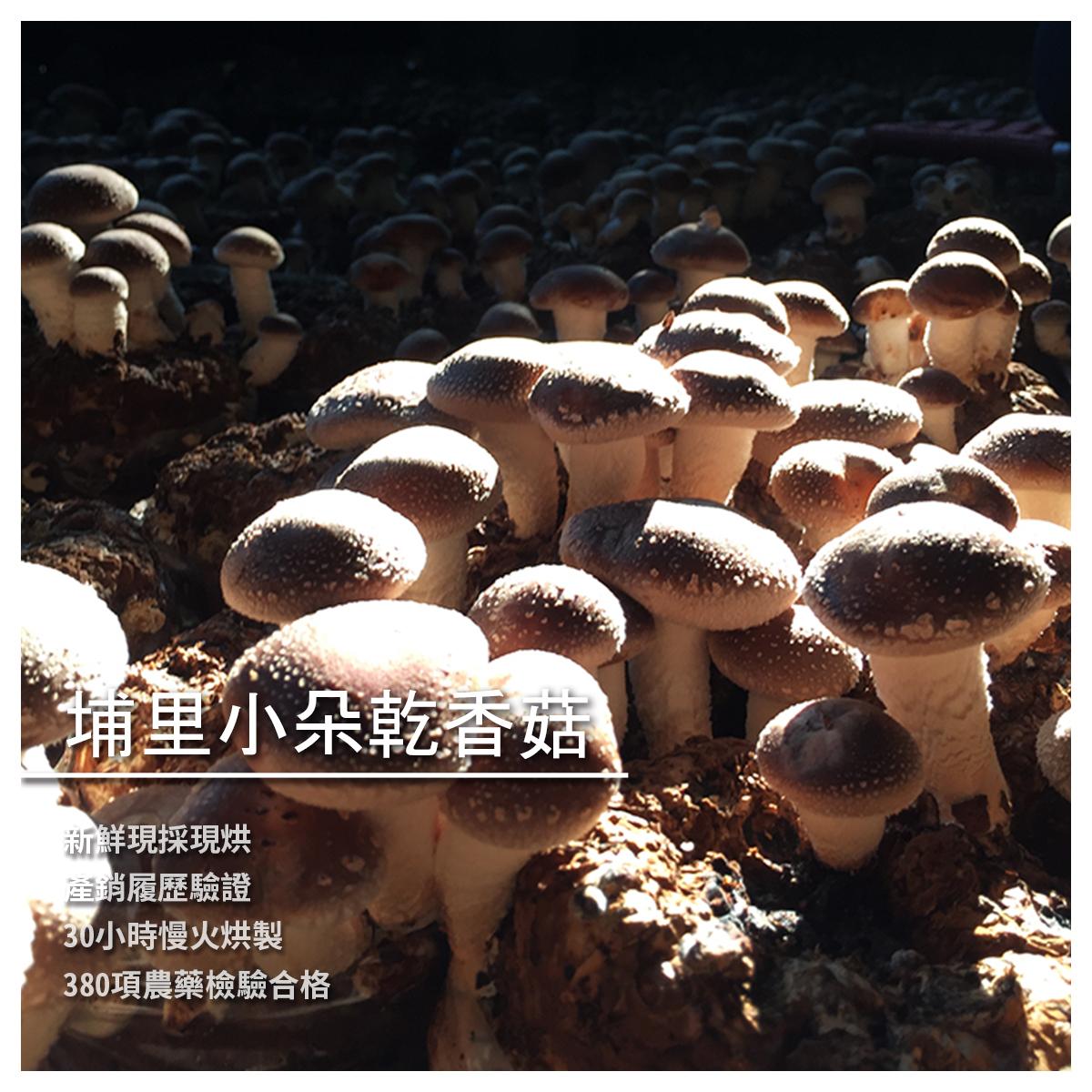 【炘宬香菇農場】埔里小朵乾香菇/600g