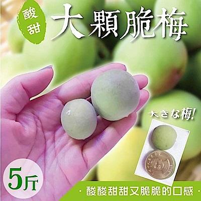 【天天果園】台灣嚴選大顆青梅5台斤/箱