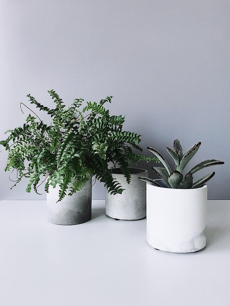 植樹-水泥圓柱3寸盆/可搭配油畫白金葛/虎尾蘭