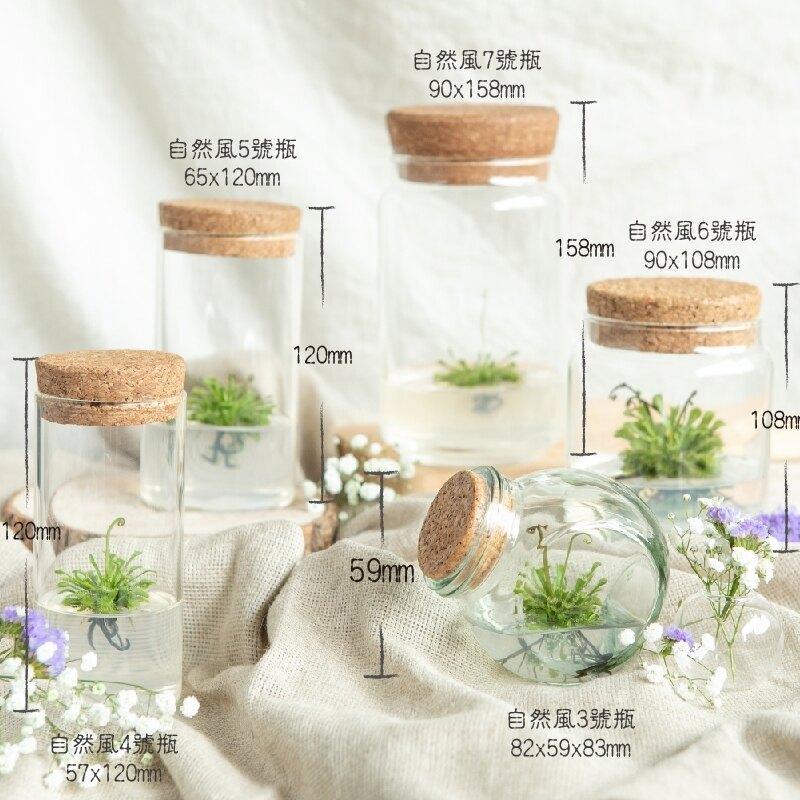 小室瓶栽 食蟲植物系列 毛氈苔 自然風4號瓶