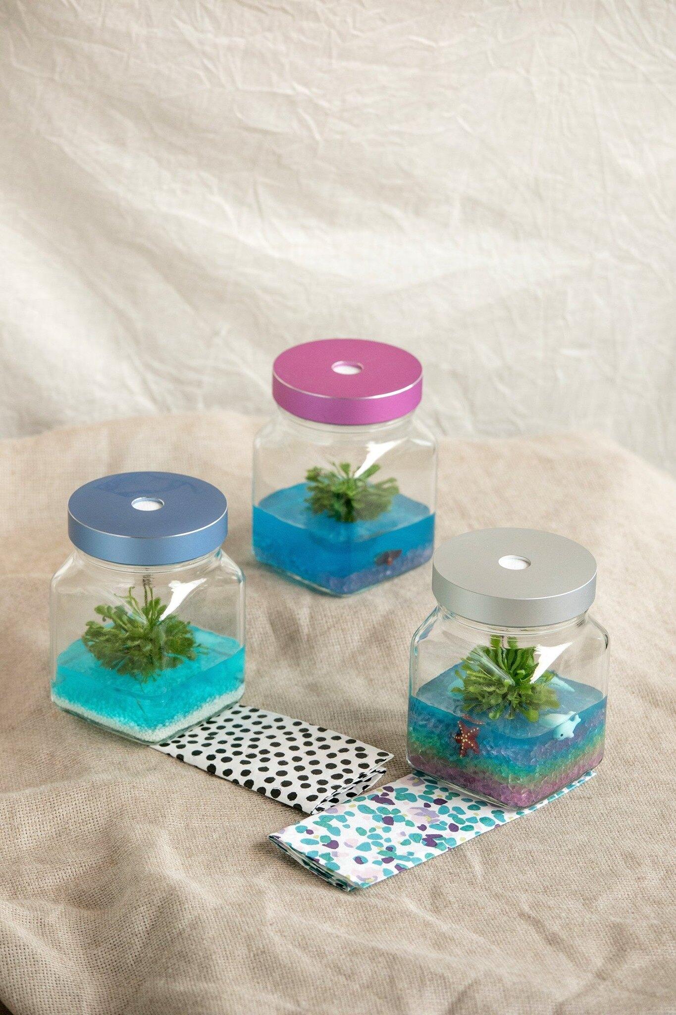 小室瓶栽 食蟲植物系列 毛氈苔 工業風2號瓶 暗夜海洋