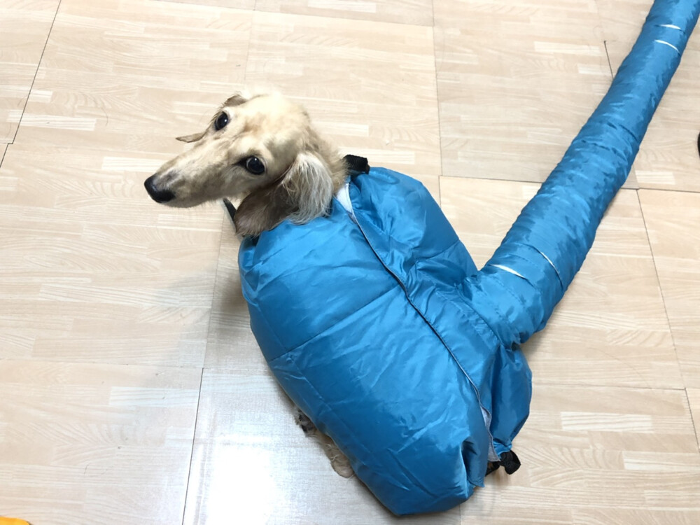 sml可選 預防感冒 寵物烘乾罩 吹毛神器 吹水衣 貓狗洗澡 快速 吹風機 烘乾衣服 寵物冬