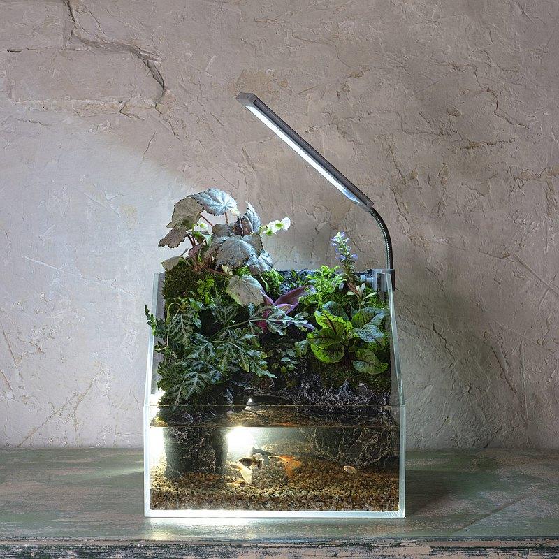 【一人成班】澶湉水陸生態缸 附下午茶