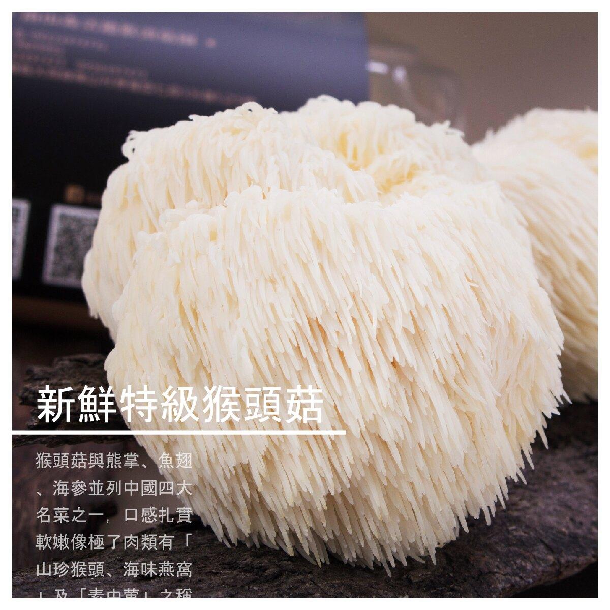 【南山森活趣猴頭菇園】新鮮特級猴頭菇 600g/盒