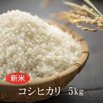 <W26 あわくら源流米 コシヒカリ白米 5kg>