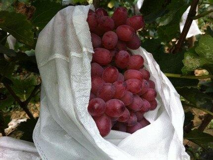 果樹防蟲袋 紙袋防蟲水果防汙染葡萄袋子果樹葡萄套袋無紡布綠色套果袋園藝套『XY2749』