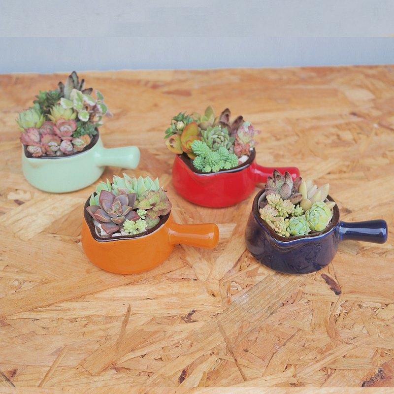 荳荳多肉植物與小雜貨-可愛手把鍋多肉植栽組合