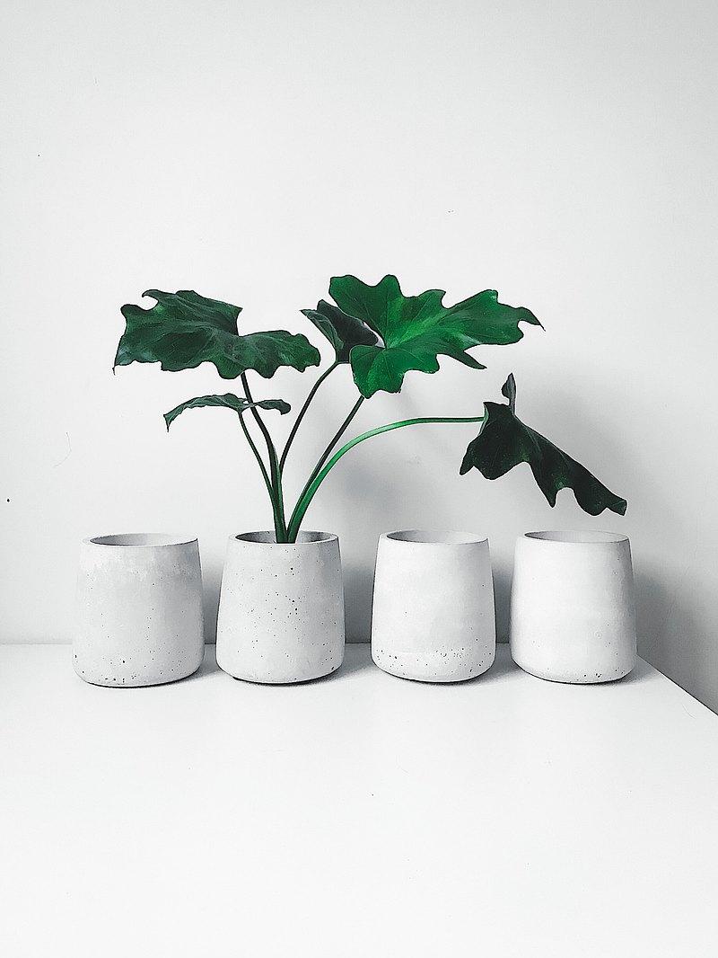 為你種樹-水泥盆器.水泥花盆