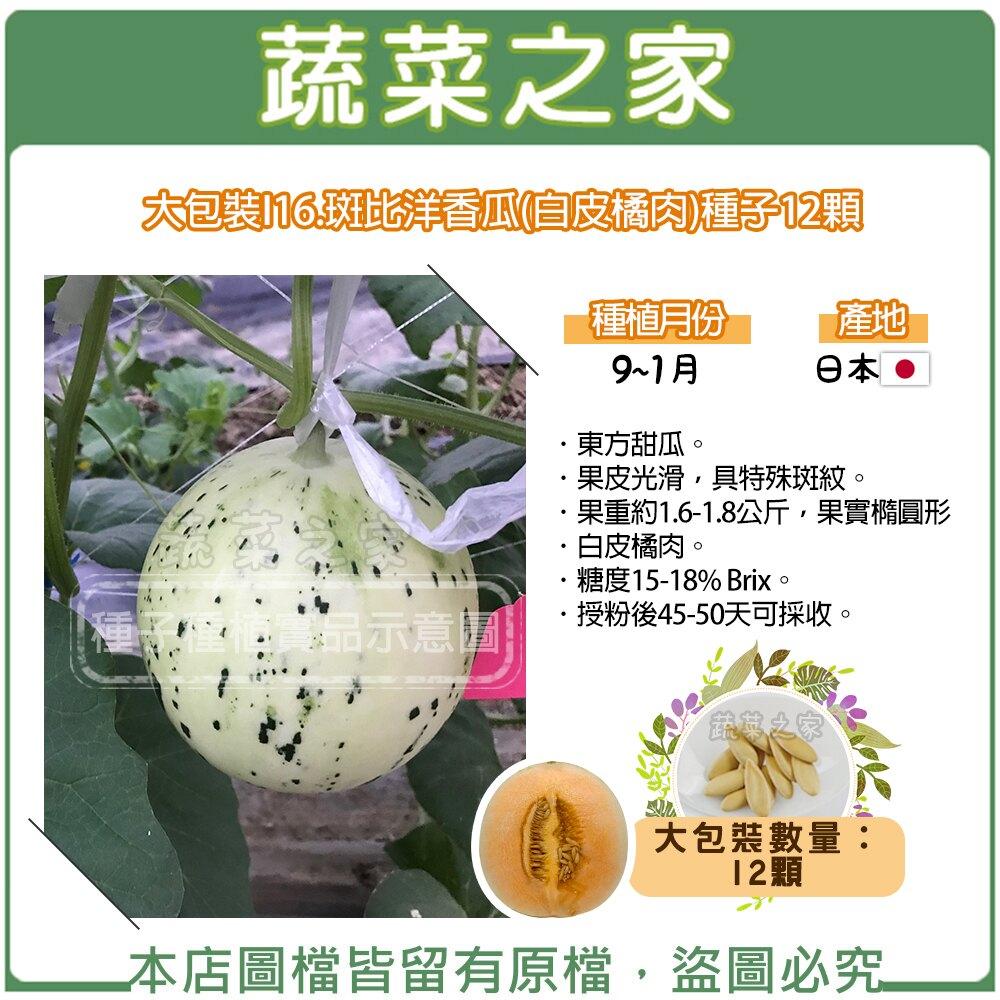 【蔬菜之家】大包裝I16.斑比洋香瓜(白皮橘肉)種子 12顆