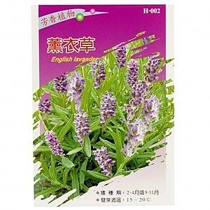 香草種子-薰衣草