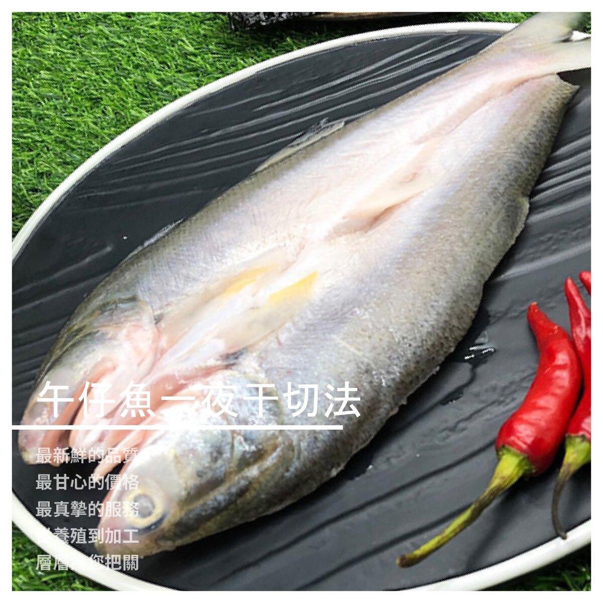 【大高雄爭鮮魚行】午仔魚 一夜乾切法  275g25g