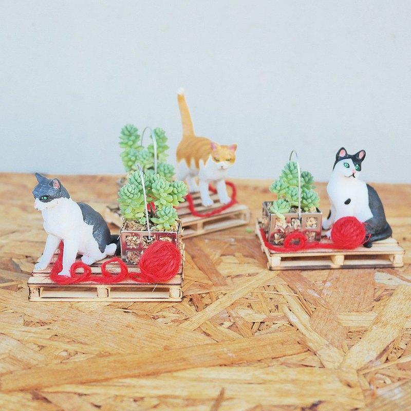 荳荳多肉植物與小雜貨-狗狗貓咪玩樂趣