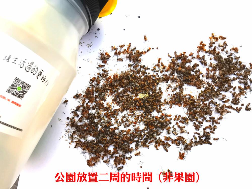 簡單有效東方果實蠅/瓜實蠅高效誘捕劑/長效緩釋棉片果園果樹有機可以使用只使用香味誘捕不含農藥