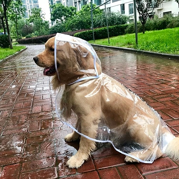 狗狗雨衣大型犬中型犬全包寵物四腳衣服防水大狗雨披【匯美優品】