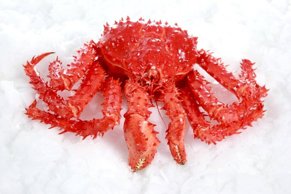 智利熟凍頂級帝王蟹