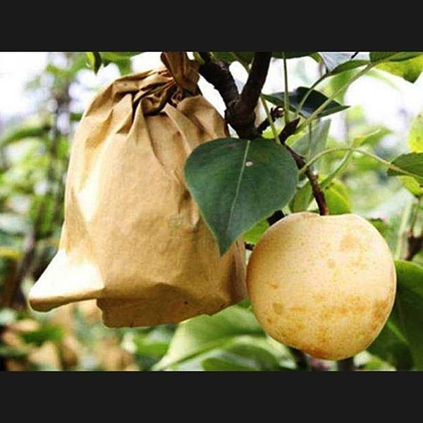 水果包裝袋樹上柚子袋套石榴透明桃子果實防蟲袋梨防鳥保護網袋 果果生活館