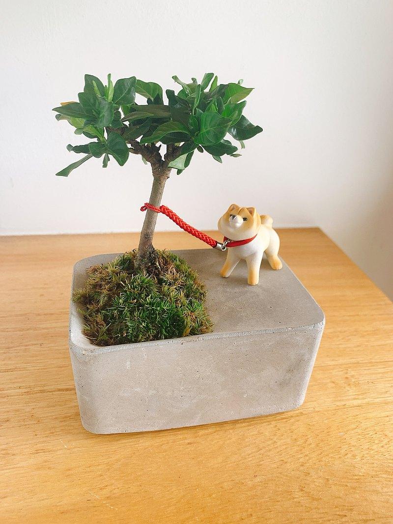 純自然 任性柴犬 小樹 草 長方水泥盆 盆栽 植物 送禮