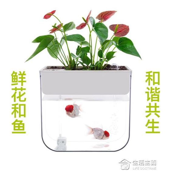 知魚魚菜共生小魚缸小型迷你水族箱免換水魚缸懶人辦公室生態魚缸