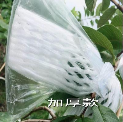 果樹防蟲袋 石榴袋套果樹透明百香果袋綠果林套袋果袋葡萄袋子防蟲水果包果袋 『MY5869』