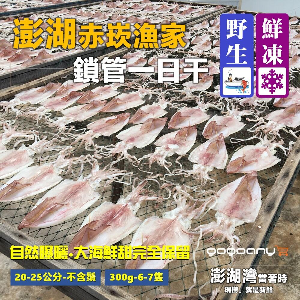 禾契鮮食澎湖赤崁漁家鎖管一日干(6-7隻/肉厚/新鮮/大尺寸)