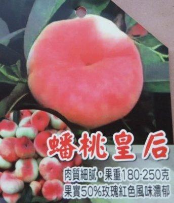 蟠桃皇后(嫁接苗)熱帶新品種【買5送1+本賣場滿5棵免運】肉質細膩+多汁