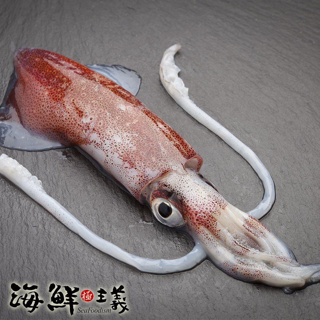 透抽(小卷) (重量:900g/包)【海鮮主義】●捕撈自印尼的新鮮透抽 ●肉質厚實甜美Q彈