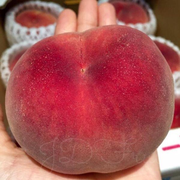 【免運費】日本山梨縣頂級大糖領水蜜桃 最高等級 (約5kg/箱)