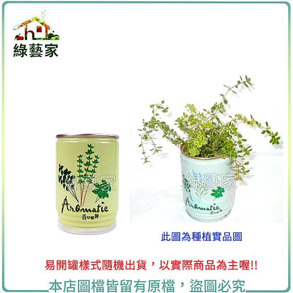 【綠藝家004-E00-1】iPlant易開罐花卉-百里香2入/組(2入優惠價-單罐88元)