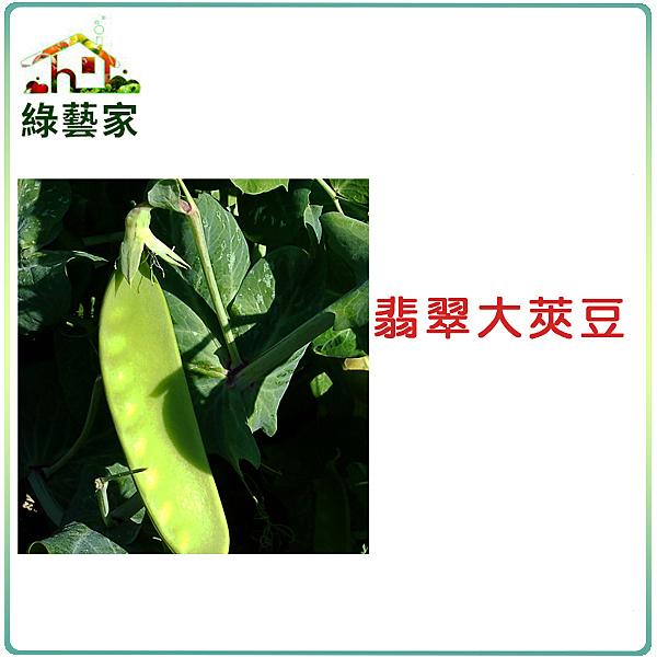 【綠藝家】E04.翡翠大莢豆(改良種)種子30顆