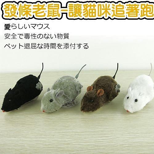 【培菓幸福寵物專營店】貓咪追著跑!!發條老鼠造型玩具顏色隨機