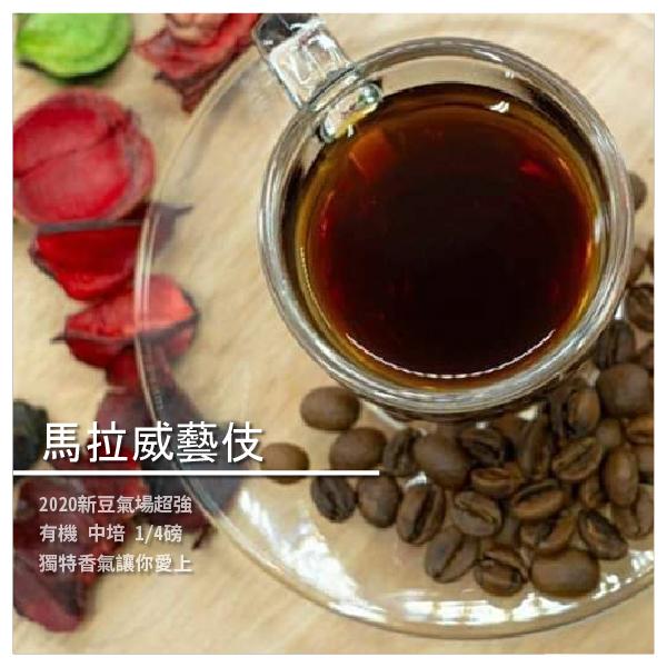 【張景貴太極教室】馬拉威藝伎咖啡豆 有機 中培