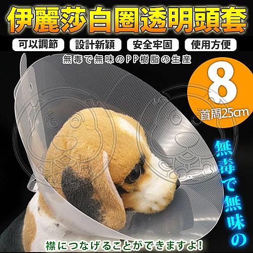【培菓幸福寵物專營店】 dyy》伊麗莎白圈透明頭套8號25cm