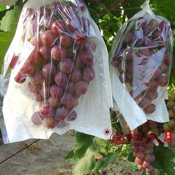 防鳥袋 葡萄專用套袋包裝防鳥防蟲水果袋套果樹果實套用保護袋套果袋防水VK69【99購物節】