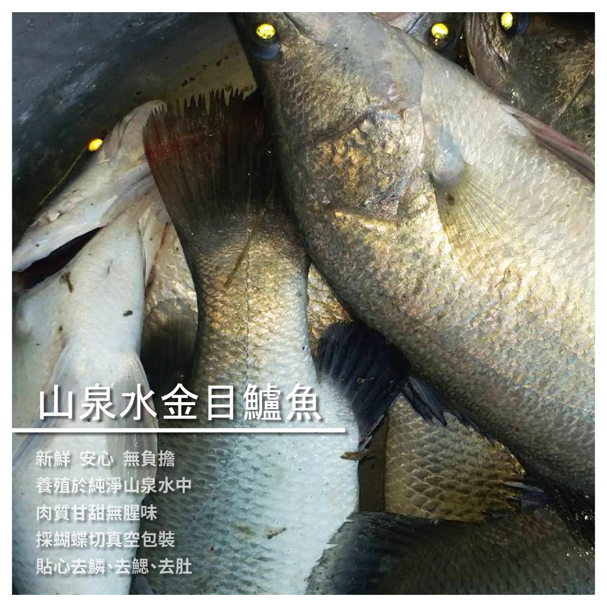 【洋昇水產】山泉水金目鱸魚300-370g