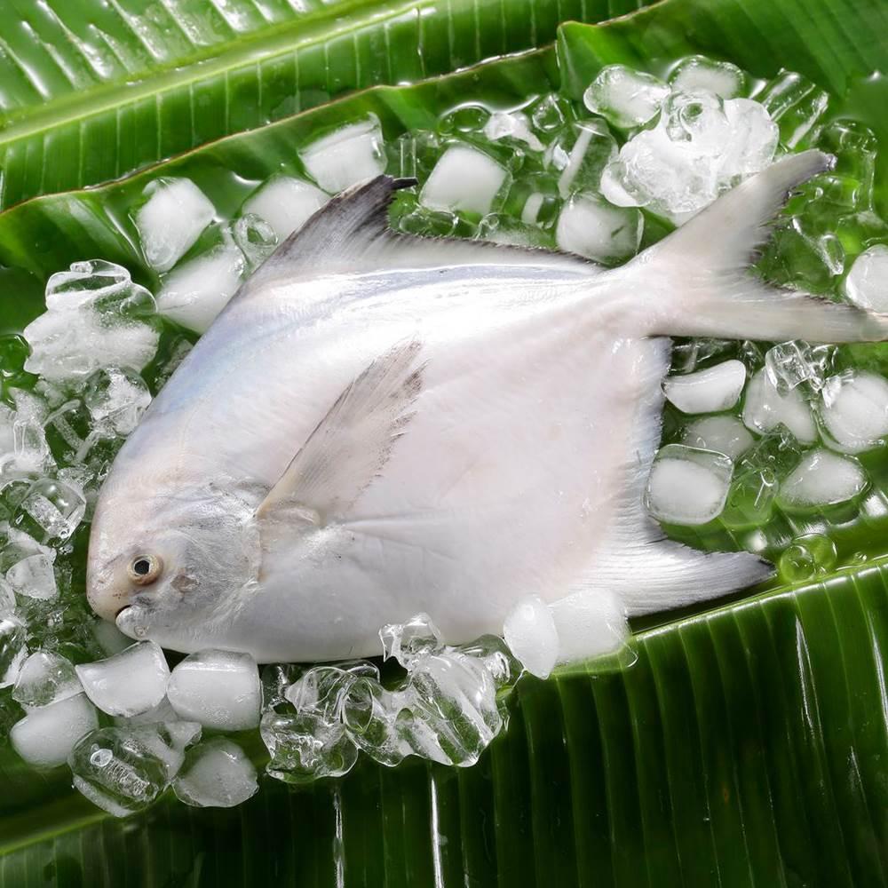 【華得水產】鮮嫩野生白鯧魚3件組(300-400G/尾)