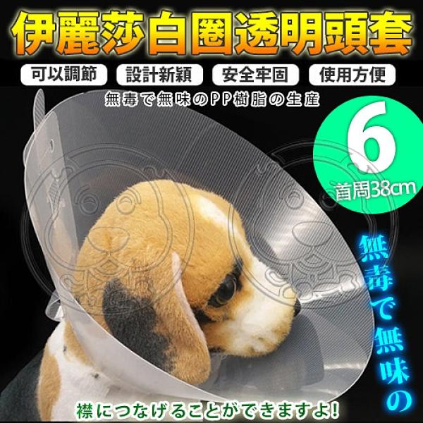 【培菓幸福寵物專營店】dyy》伊麗莎白圈透明頭套6號38cm