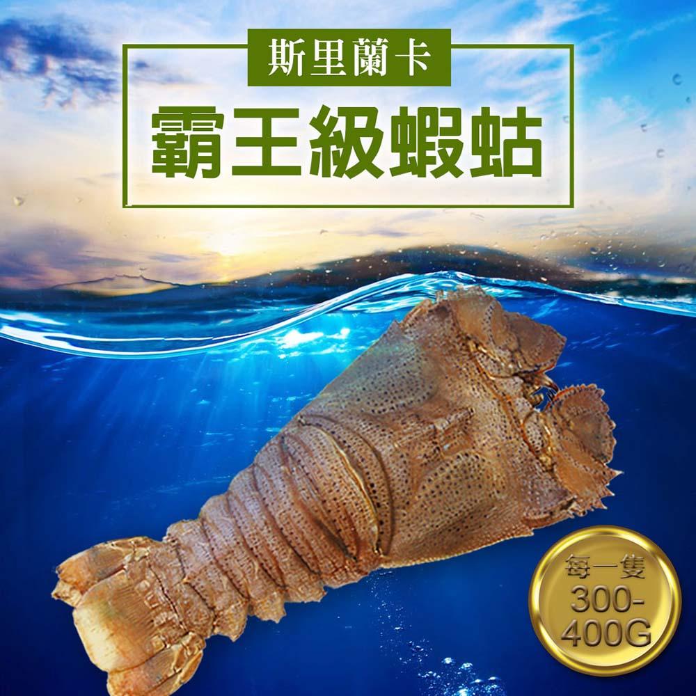 任選[優鮮配] 斯里蘭卡巨無霸蝦蛄(450g/隻)