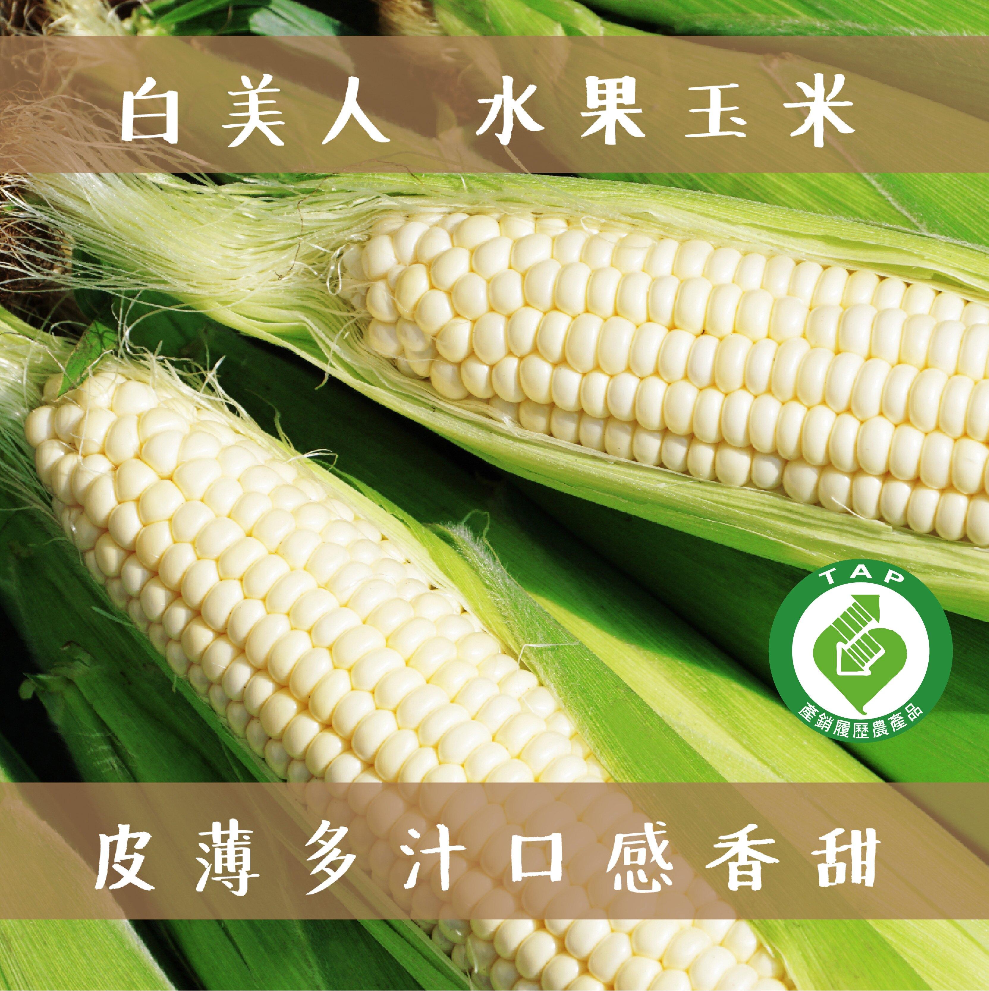 產銷履歷白美人水果玉米30斤