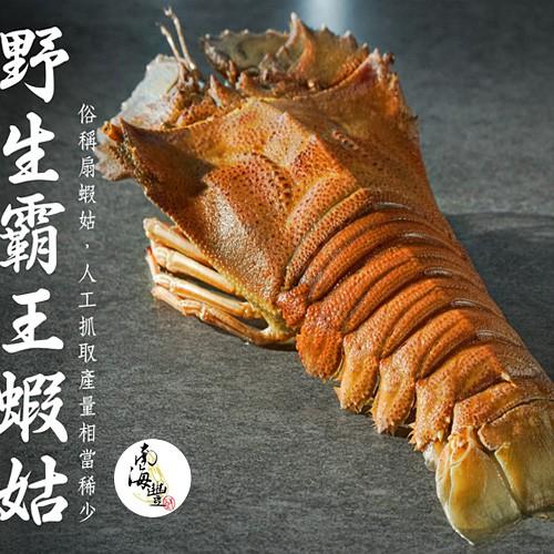 大size 南海豐【野生霸王蝦姑】300g~350g/尾,頂級蝦姑排,鮮甜多汁,肉質媲美龍蝦紮實好吃