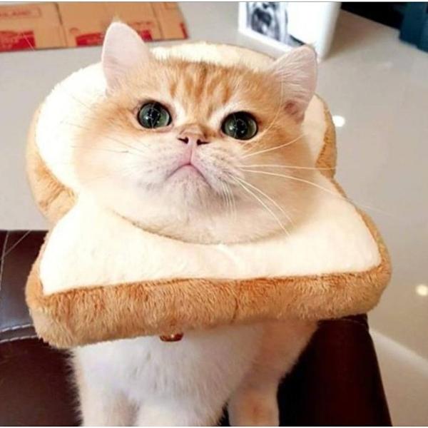 【培菓幸福寵物專營店】寵物貓咪頭套 吐司頭套 英短布偶橘貓可愛麵包片 卡通頭套 L號
