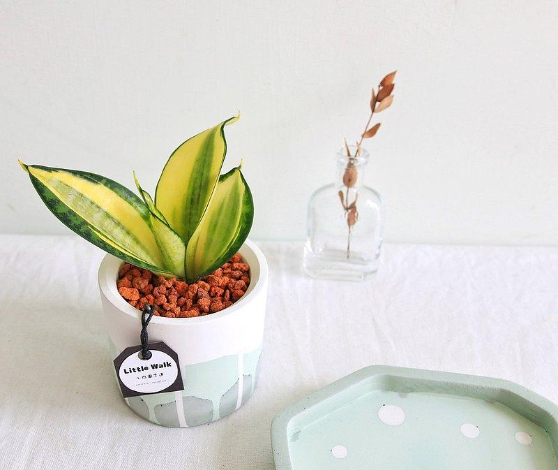 虎尾蘭 森林系水泥盆栽 可客製英文名字 生日禮物 開幕盆栽
