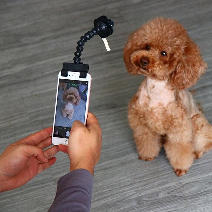 寵物拍照神器 汪星人 毛小孩 寵物自拍棒 貓咪狗狗看鏡頭自拍夾 愛犬自拍器 寵物用品葉子小舖