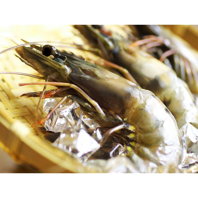 【海之醇】天然新鮮活凍草蝦300g(8p)
