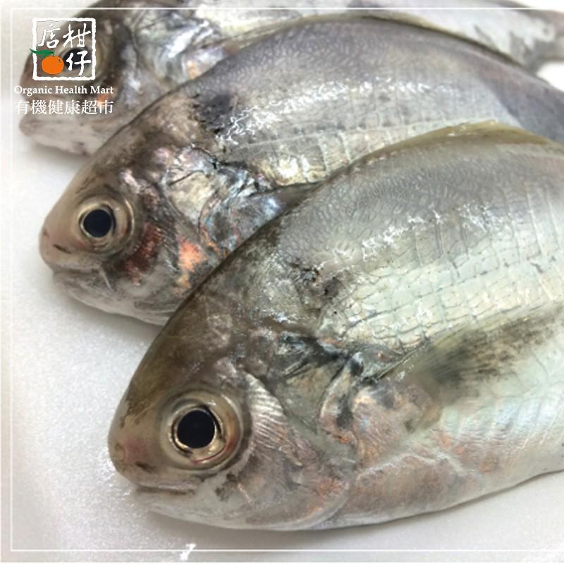 澎湖肉質魚 (300g±10%/包)