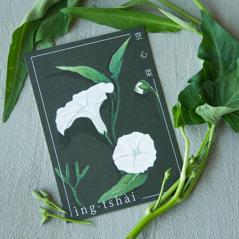給植物的一封情書-空心菜