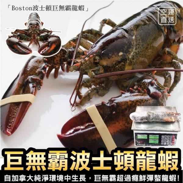 加拿大波士頓螯龍蝦(每隻約400-500g±10%)【999免運】