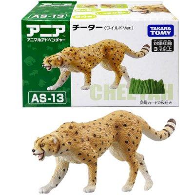 【附發票 3C小苑】AN13960 正版 多美 AS-13 獵豹 野生版 探索動物 豹 多美動物 可動 動物模型 玩具