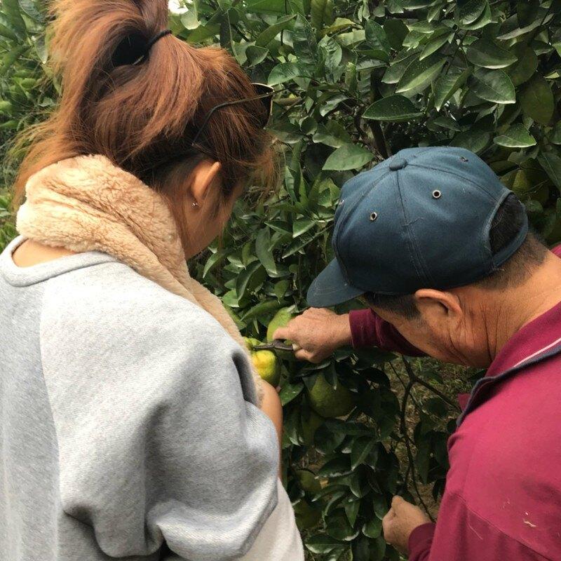 LIL & TEA 養⽣⻁頭柑茶 茶包六入/盒 免運